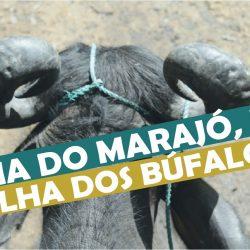 Ilha do Marajó no Pará a ilha dos búfalos