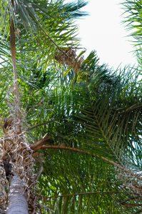 as palmeiras, só não sei se são de gueroba