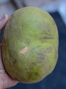 O fruto típico do cerrado por fora